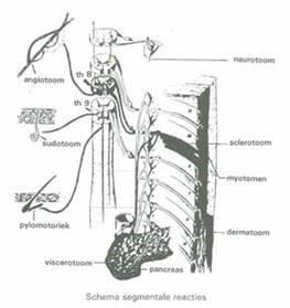 bindweefselmassage-zenuwstelsel