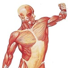 hdv-sportmassage-spierbalans-1