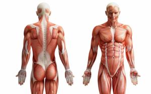 hdv-sportmassage-spierbalans-spieren-voor-achter